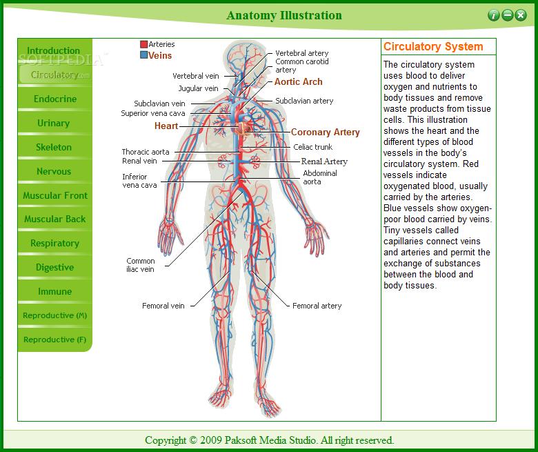 Download Anatomy Illustrator 1.0.0
