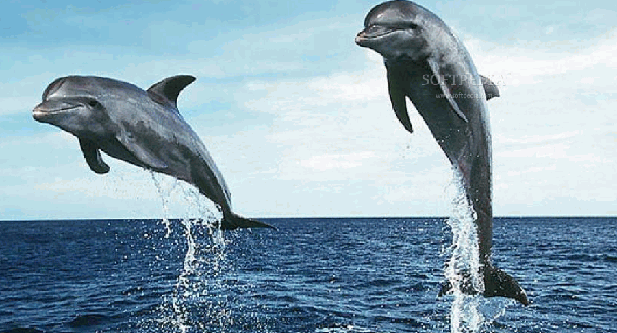 Dolphin Screensavers