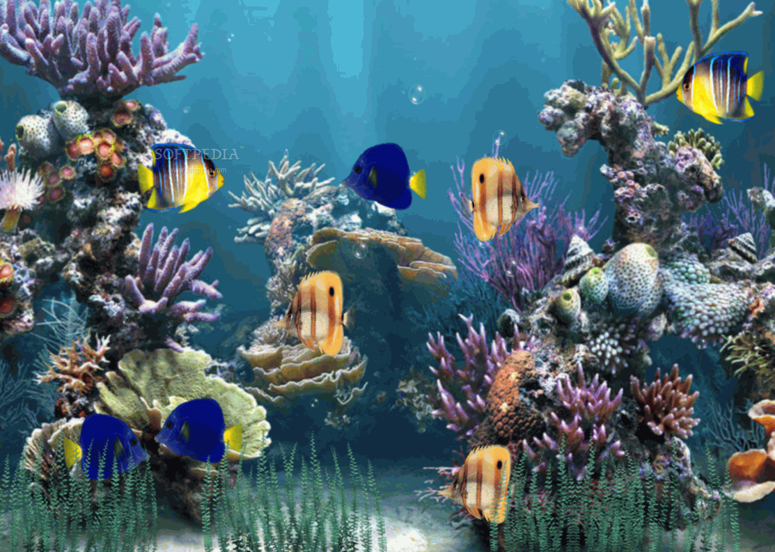 Aquarium Animated Wallpaper This Is How The Lication Will Display Beautiful Images Of Aquariums On