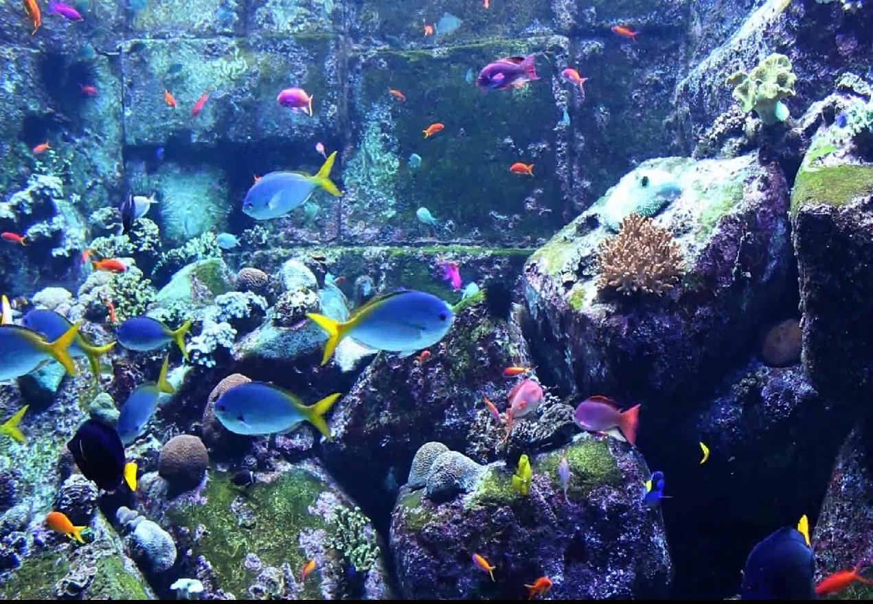 Aquarium screensaver video search engine at for Fish tank screen