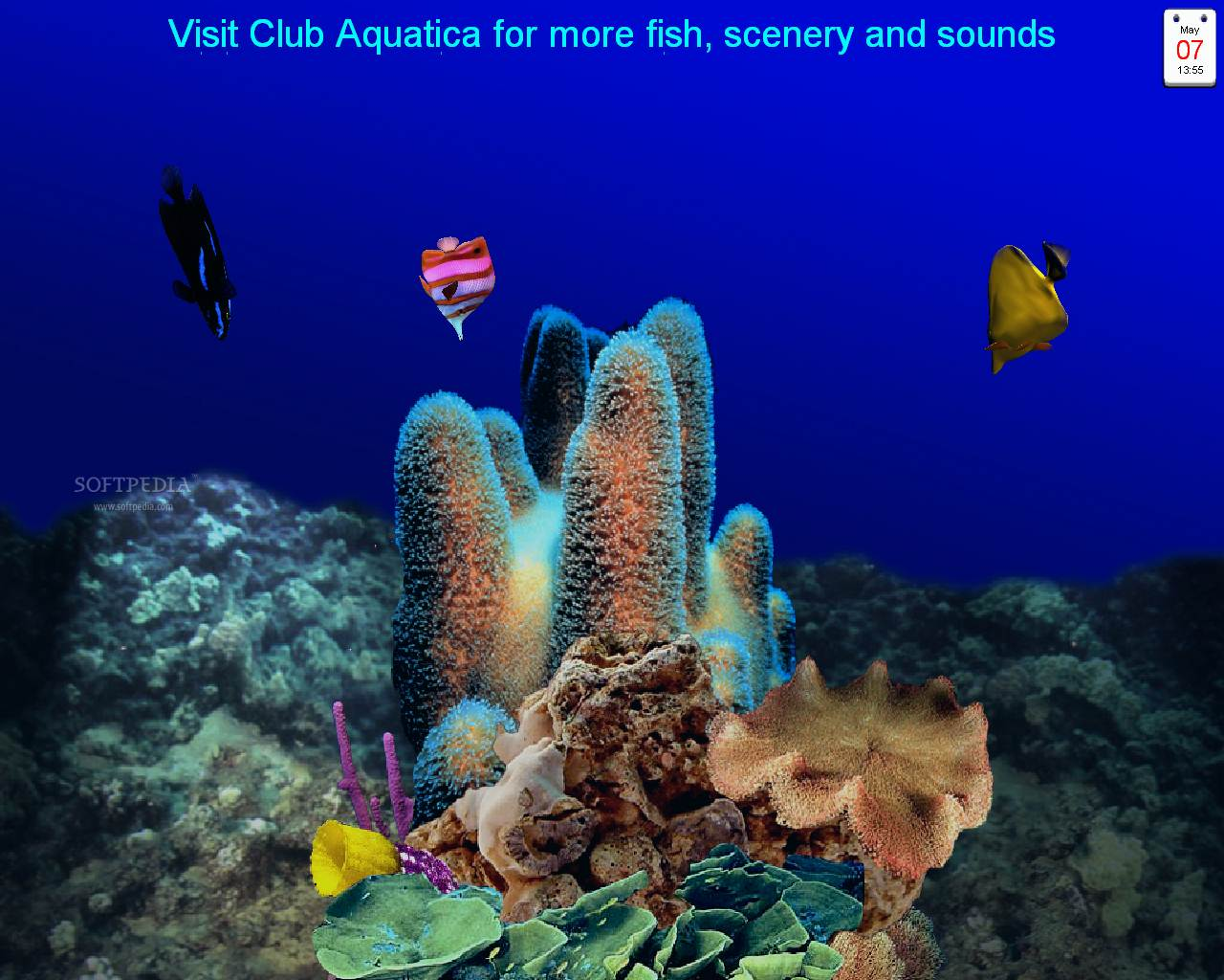 Download 3d free screen saver software: aquatica 3d fish screen.