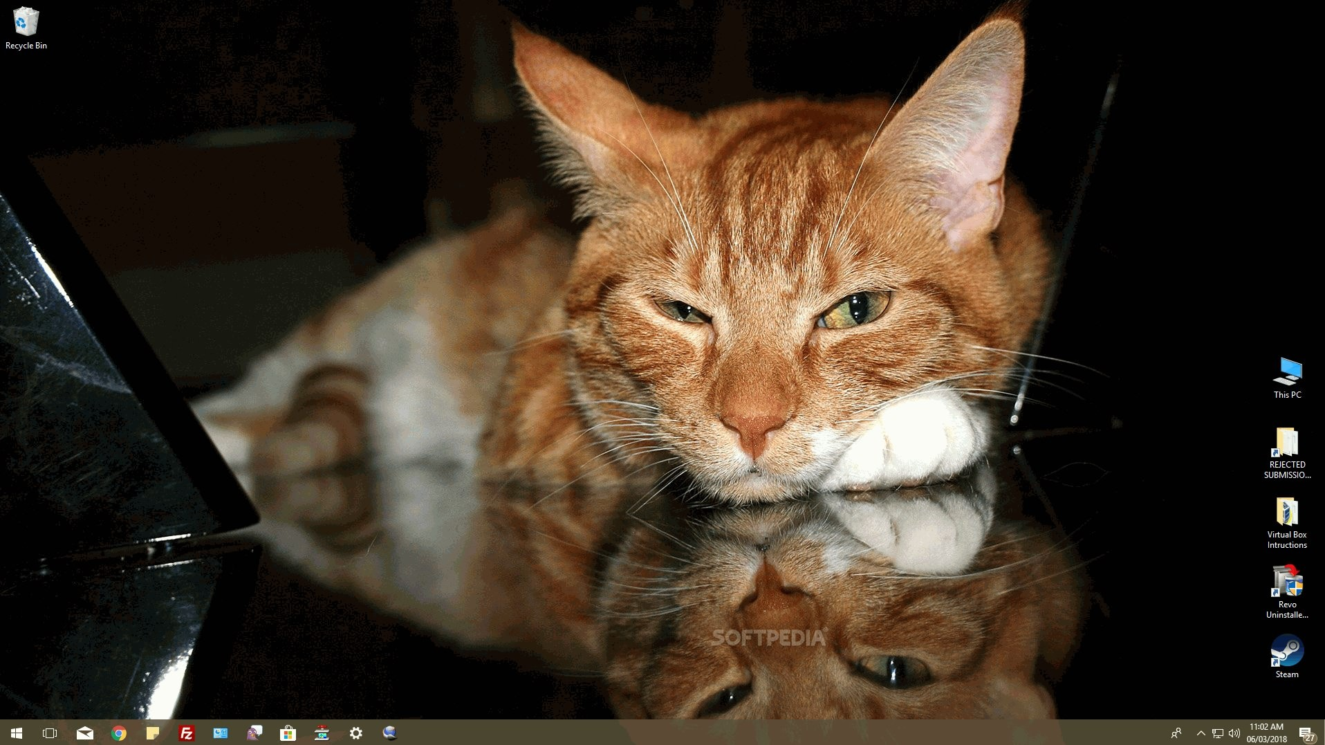 download cats everywhere for windows 10 1 0 0 0