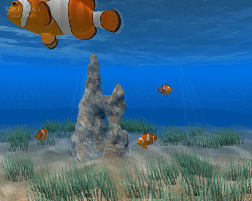 Clown fish screensaver download for Swimming fish screensaver