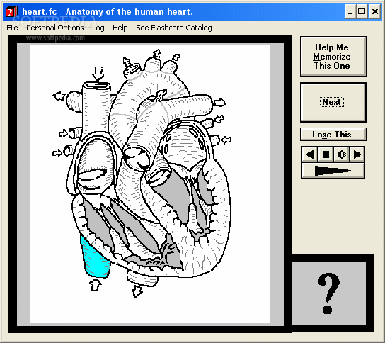 Download Computer Flashcards Of The Anatomy Of The Human Heart 11