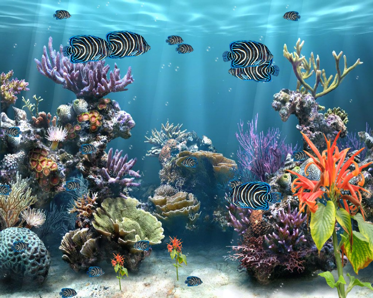 Aquarium screensaver free download full version for Fish tank screen