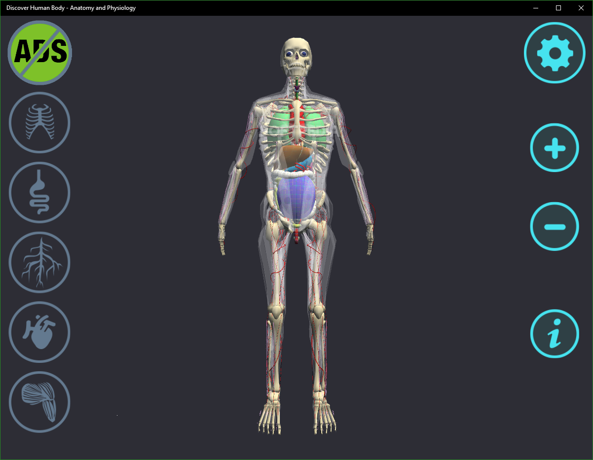 anatomy and physiology of human body pdf