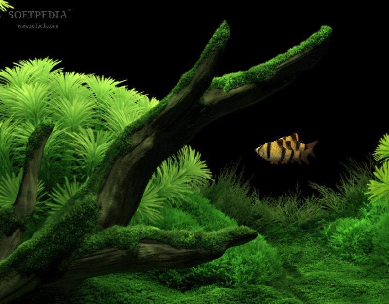 Download dream aquarium - Dream aquarium virtual fishtank 1 ...