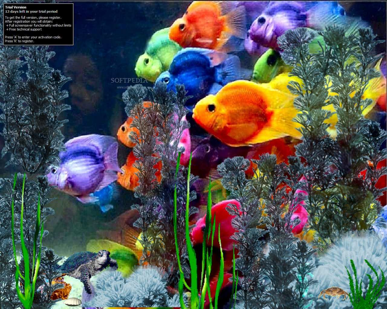 Freshwater aquarium fish ebook free download - 61 Best Images About Beautiful Things I Admire On Pinterest Mallard Tropical Fish And Colorful Fish