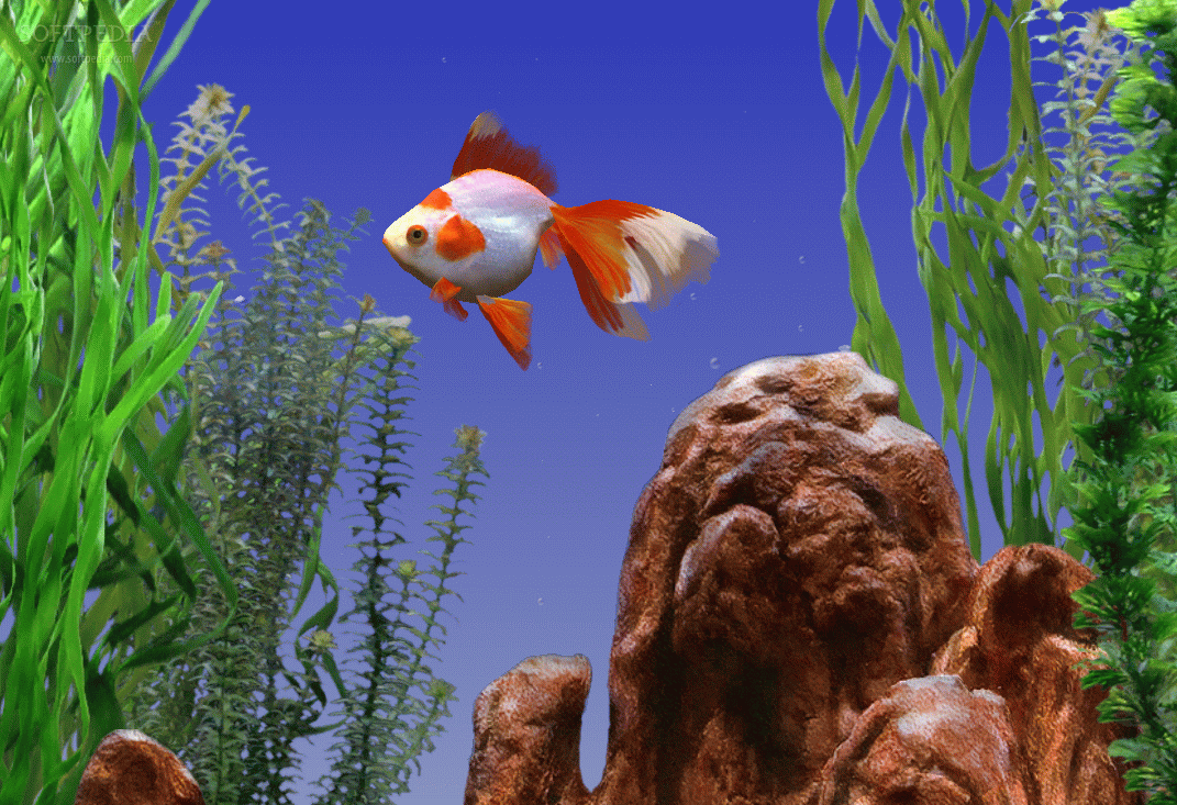 goldfish screensaver brings the - photo #6