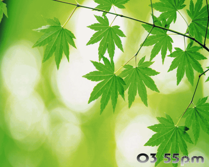 Download Green Foliage Free Screensaver 2 0