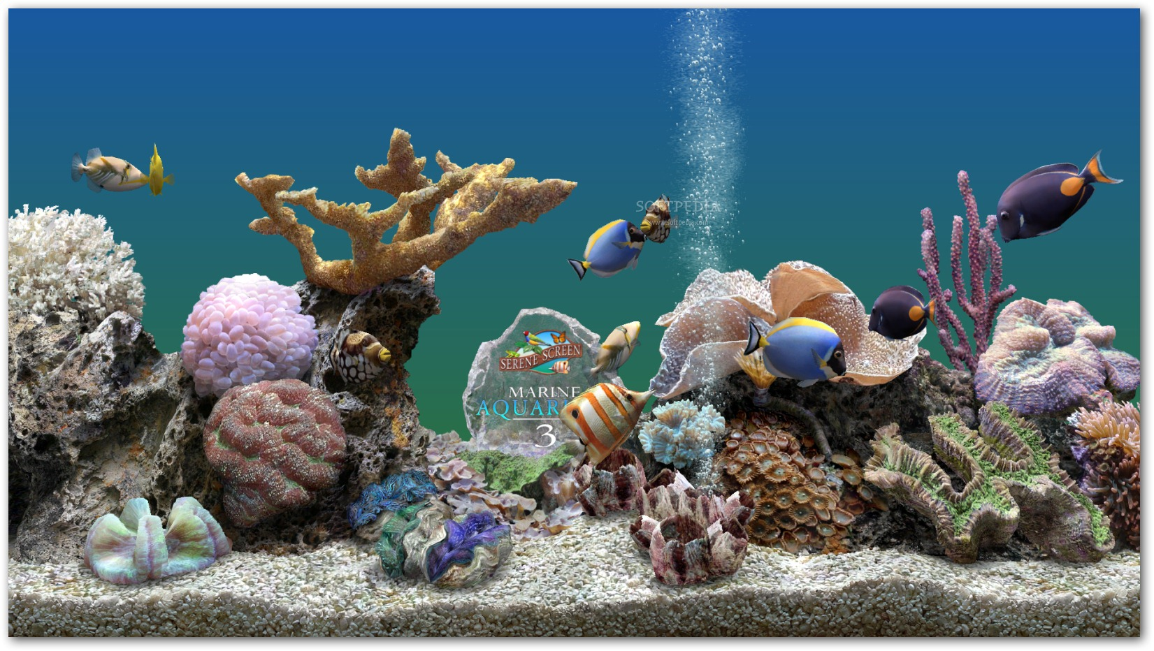 Marine Aquarium With You Are Able To View Interesting Species Right On