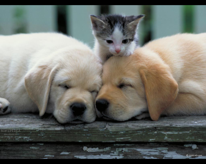 Download Puppies And Kittens