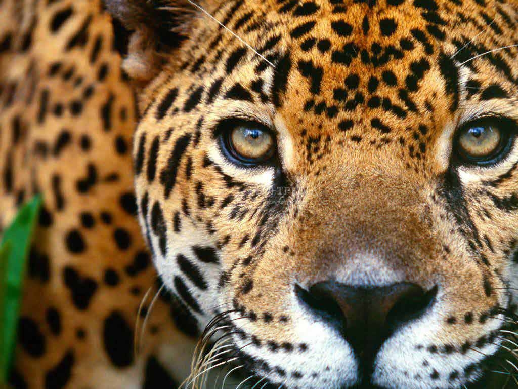 Collection Of Best Animal Wallpapers: Animals Collection 1 1.0