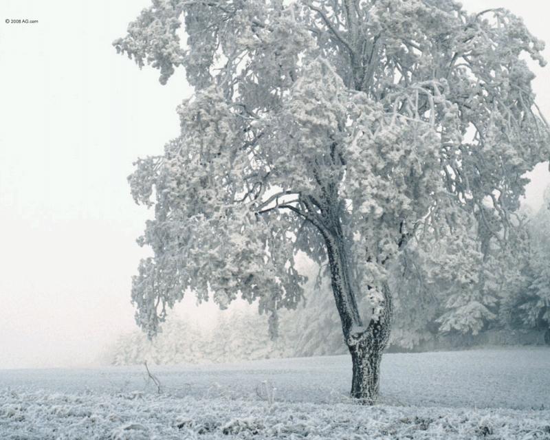 Snowbound - YouTube