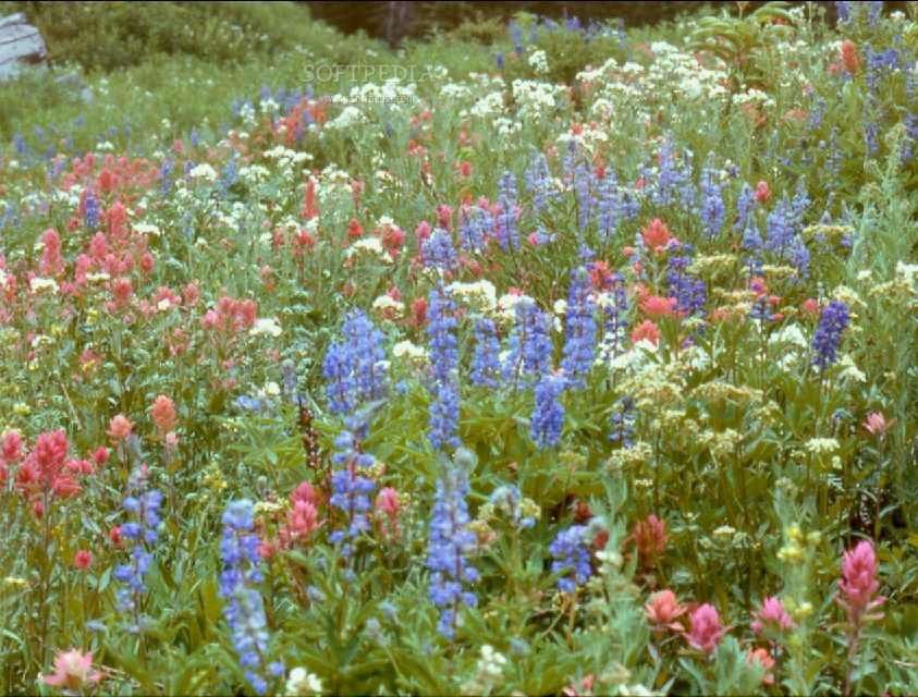 Wildflowers - Aggie Horticulture