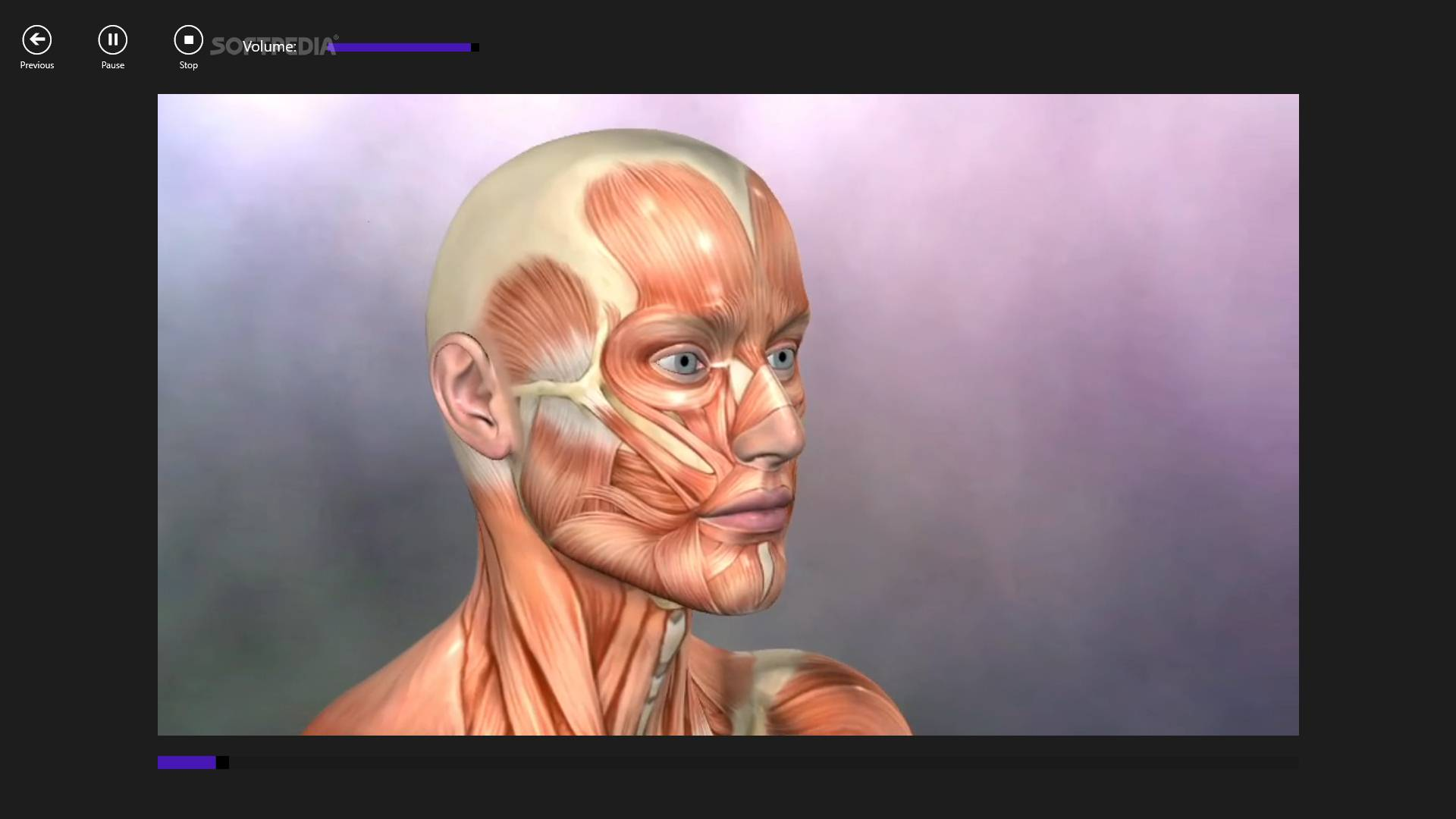 Download Muscle And Bone Anatomy 3d For Windows 10 1009