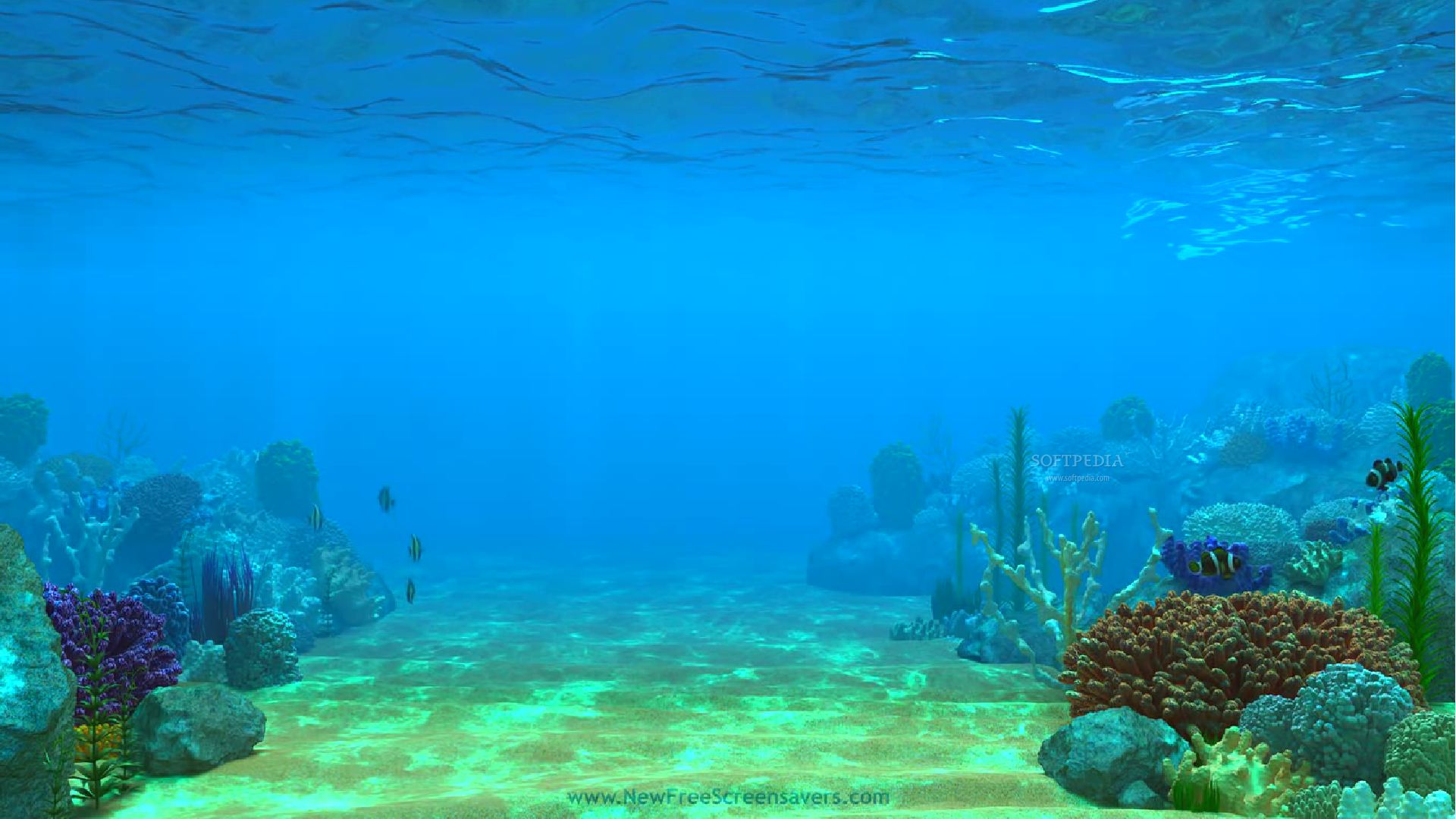 nfs3DUnderWaterLife4 screenshot 1 - This is an example of how the following animated screensaver will be displayed on your monitor.