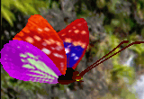 Free 3D Butterfly Screensaver